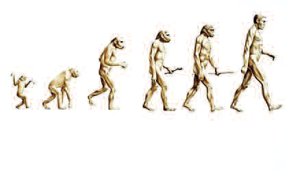 Picture of the Theory of Evolution